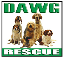 Best Dawg Rescue